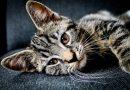 """Niezwykły """"koci testament"""" pomógł. Nowe domy znalazło 7 zwierząt zmarłej właścicielki"""