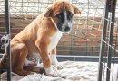Wrocławski deweloper w ramach świątecznej akcji buduje domy dla psów
