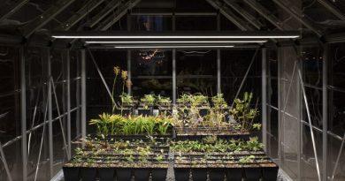 Niezwykły projekt amerykańskiego artysty. Przywrócił do życia rośliny, które wyginęły 200 lat temu