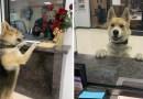 """Pies przyszedł na posterunek policji w Teksasie aby """"zgłosić swoje zaginięcie"""""""