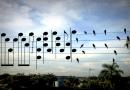 Mężczyzna skomponował piosenkę, używając położenia ptaków siedzących na przewodach elektrycznych, żeby zapisać nuty
