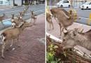 W opustoszałych przez kwarantannę miastach pojawiają się zwierzęta