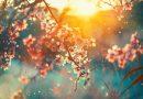 W piątek rozpoczyna się astronomiczna wiosna