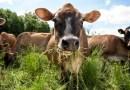 Nowa Zelandia: Uprawa roślin ma zastąpić hodowlę zwierząt