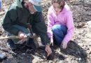 Ludzkość naprawia swoje błędy – w miejscu opuszczonych kopalni węgla zasadzono już 187 mln. drzew