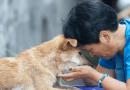 Dobre wieści z Chin. Pierwsze miasto zakazuje spożywania psiego mięsa