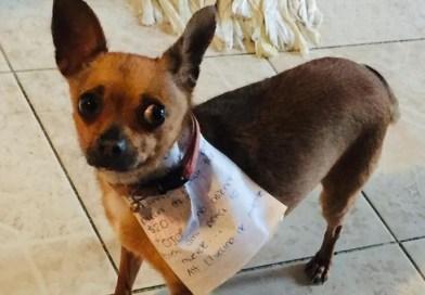 Nie mógł wyjść do sklepu z powodu kwarantanny, wysłał więc psa na zakupy. Oto jak zwierzę wywiązało się z zadania