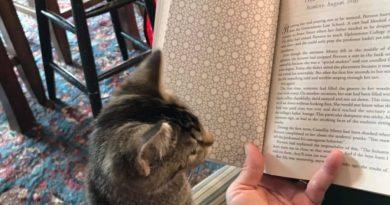 W tej księgarni koty mogą poruszać się zupełnie swobodnie, a klienci mogą je adoptować