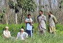 """Tarcza antykryzysowa w Pakistanie. Bezrobotnym zlecono posadzenie """"10 miliardów drzew"""""""