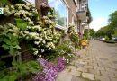 Gmina pozwala mieszkańcom rozłupywać chodniki i sadzić rośliny