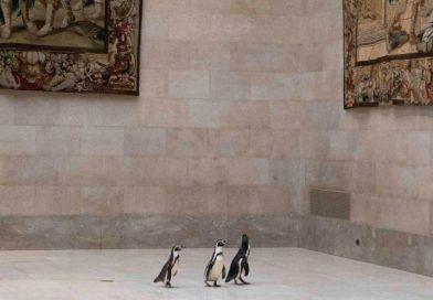 Wpuścili pingwiny do muzeum. Zobacz, co się stało
