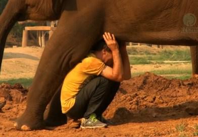 Mężczyzna uratował ogromne zwierzę. Teraz olbrzym chce z nim chodzić za rękę