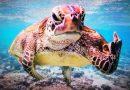 To zdjęcie żółwia wygrało Comedy Wildlife Photography. Na pewno was rozśmieszy.
