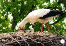 Wyzwanie ornitologiczne. Ile ptaków w ciągu roku uda ci się zobaczyć