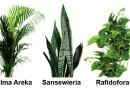 Jak uprawiać świeże powietrze? Poznaj 3 potężne rośliny na każdą okazję
