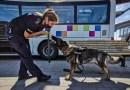 Dożywotnia opieka dla zwierząt po służbie
