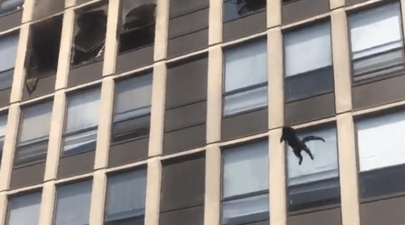 Kot wyskoczył z 5. piętra