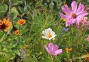 Krajowa Rada Izb Rolniczych apeluje o niekoszenie trawników