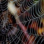 Niesamowita muzyka zaszyta w pajęczej sieci