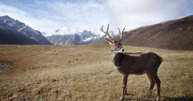 Koniec dewastacji Alaski