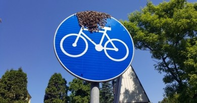 Rój pszczół przysiadł przy warszawskiej ścieżce rowerowej