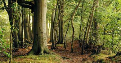 Bukowe lasy Bieszczad wpisane na listę UNESCO