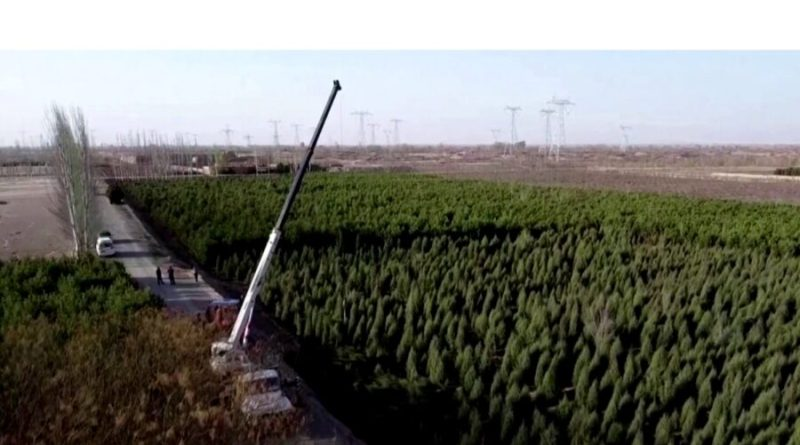 Chiny sadzą las