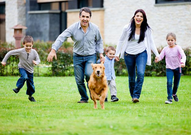 Wlasciciel psa zaplaci 6231091