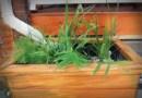 Ogrody deszczowe