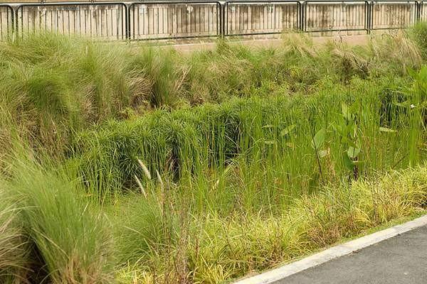 przyklad ogrodu deszczowego zrodlo httplandarchs.comrain gardens essential guide