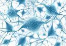 Regeneracja uszkodzonych nerwów jest możliwa