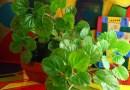 7 leczniczych roślin, które warto mieć w domu