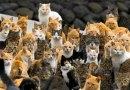 Ainoshima. Wyspa całkowicie opanowana przez koty