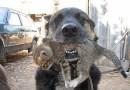Pies-bohater. Wyniósł kota z płonącego budynku