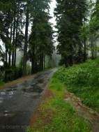 Czechy, Góry Stołowe, 2009