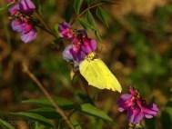 Bug, majówka 2009