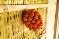 Czy ktos wie jaki to owoc