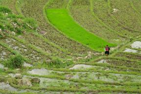 Tarasy ryzowe wokol Sapy Wietnam (18)
