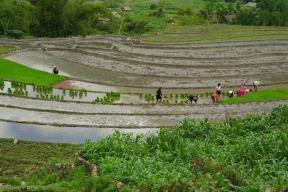 Tarasy ryzowe wokol Sapy Wietnam (19)