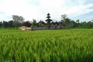 Pola ryzowe na Bali okolice Ubud (4)