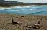 Emerald Beach (1)