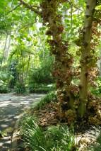 Ogrod botaniczny (1)