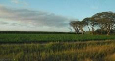 Wschodnie wybrzeze Australii trasa z Cairns do Sydney (2)