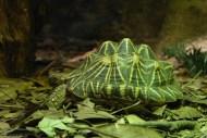Zoo Sydney (10)