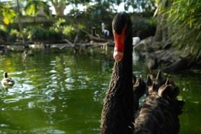 Zoo Sydney (24)