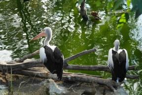 Zoo Sydney (25)