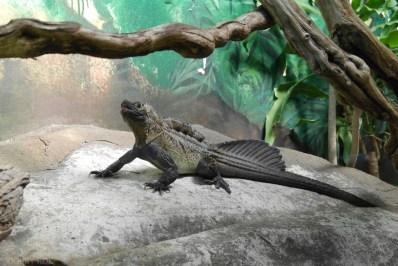Zoo Sydney (8)