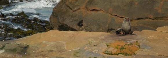 Wybrzeze Otago Moeraki Boulders (6)