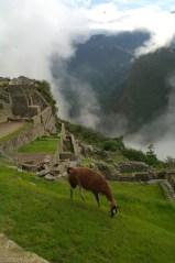 Gora Wayna Picchu z widokiem na Machi Picchu (4)