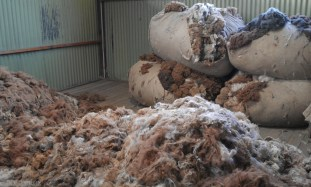 W fabryce wełny Arequipa (1)